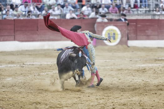 Bullfighter Luis Francisco Espla bullfighting with a crutch in a