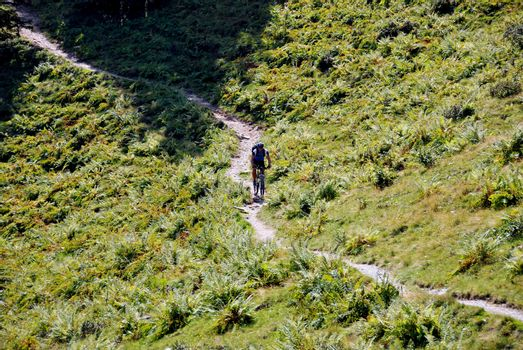 a narrow away with mountain bikers between ferns