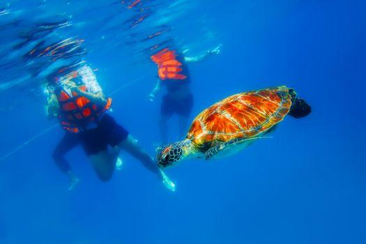 Green Sea Turtle in blue ocean at Similan Islands