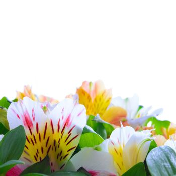Beautiful Coloured Flowers on the White Background