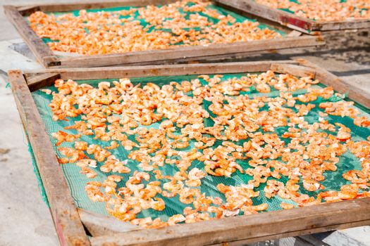 Shrimp drying