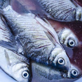 die fish in thailand