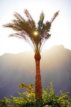 sun through the palm leaves
