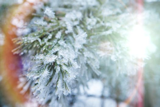 branch of a conifer with snow in lights