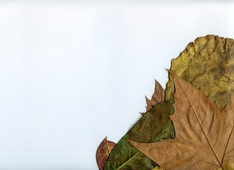 Leaves and Space