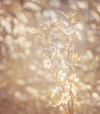 Spring blooming background
