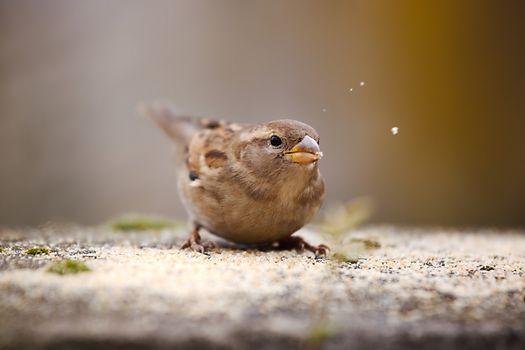 Bird eating seeds in winter