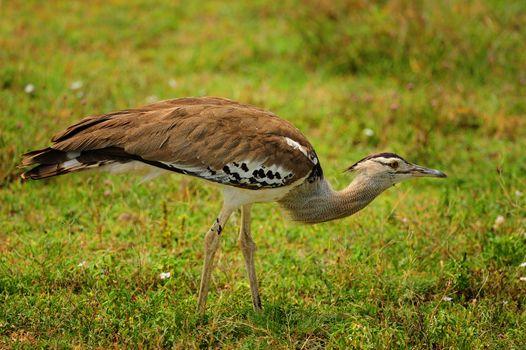 birds of Tanzania