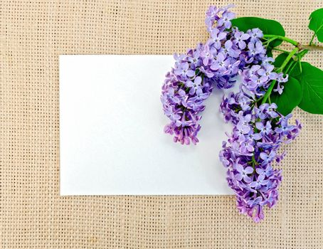 Lilac on sackcloth with paper