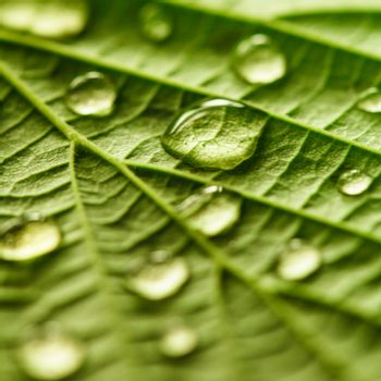 Green leaf macro with water drops close up