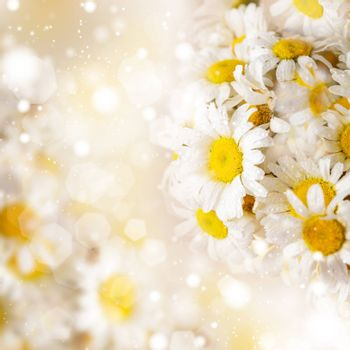 White daisies over defocused background for spring design