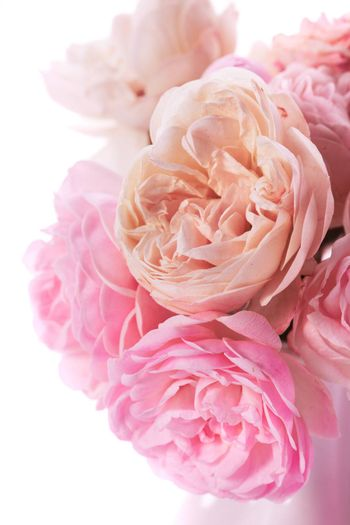 Pink roses bunch closeup in vase on white