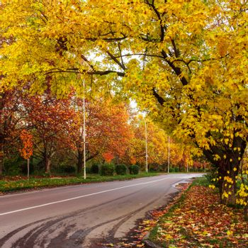 Autumn landscape with road and yellow and red leaves