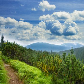 Landscape with pathway between the grass, spruce and mountains
