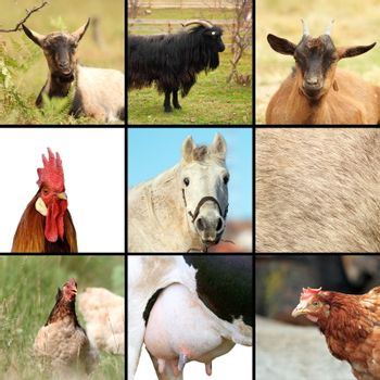 some animals from the farm, collage with birds and mammals