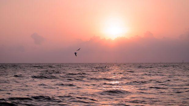 Seagull with beautiful sunset