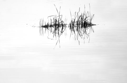 Water mirror and reed with reflection