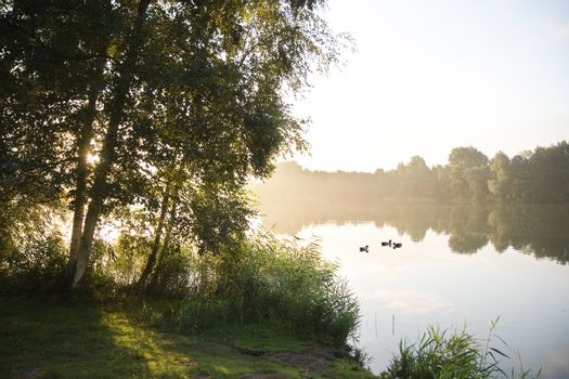 Sunrise and birchtrees at lake in summer
