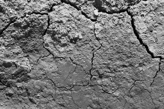 Lines in cracked earth