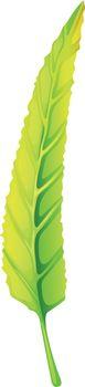 A green elongated leaf