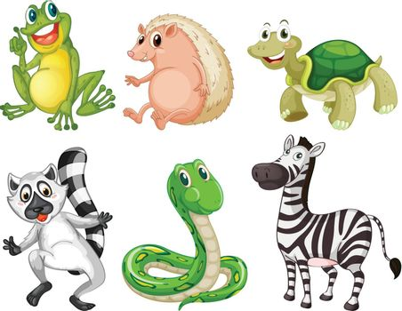 Illustration of the different species of animals on a white background