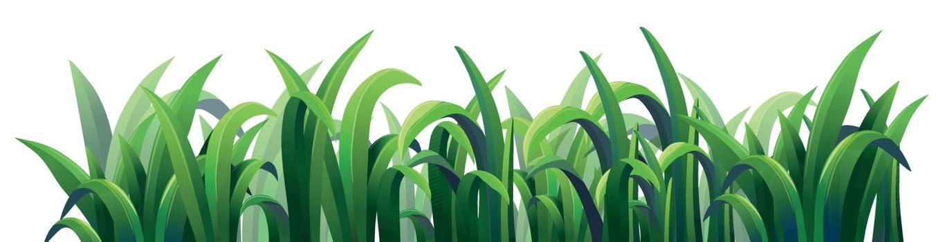 Green elongated grasses