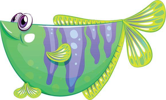 A unique fish