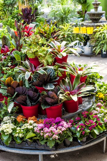 Plant nursery store with many plants for sale on display rack