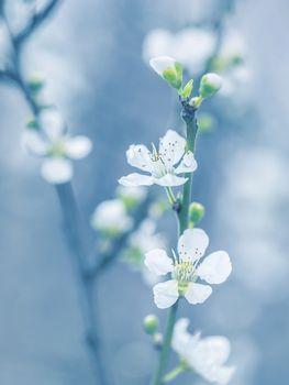 Blooming tree at spring
