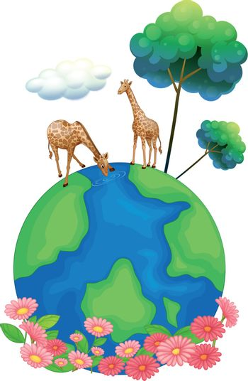 Illustration of the two giraffes above the earth on a white background
