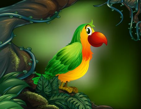Illustration of a parrot at the rain forest