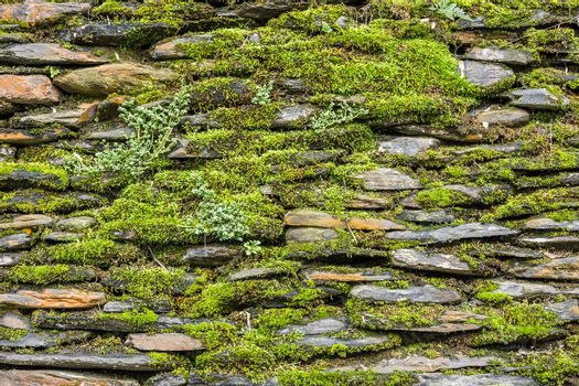 Stone wall with green moss