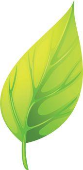 A pointed leaf
