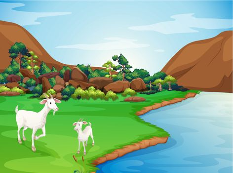 Two goats at the riverbank