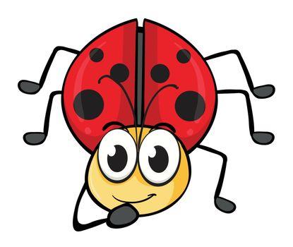 illustration of a ladybug on a white background