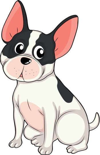 Illustration of a young bulldog on a white background