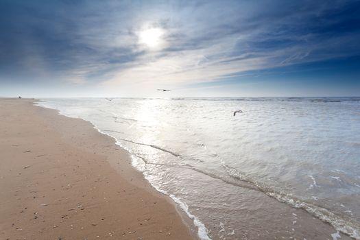 seagulls over sand beach in North sea