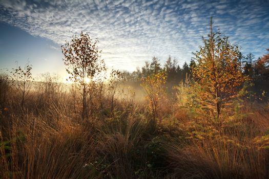 gold morning sunshine over misty marsh with trees
