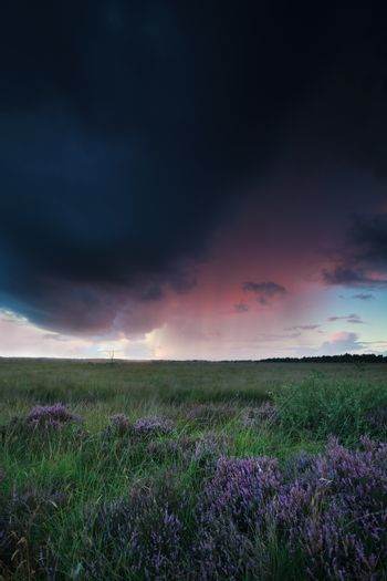 shower over marsh with heather at sunset