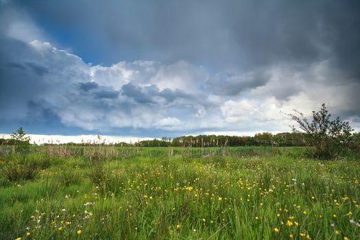 stormy clouded sky over flowering marsh