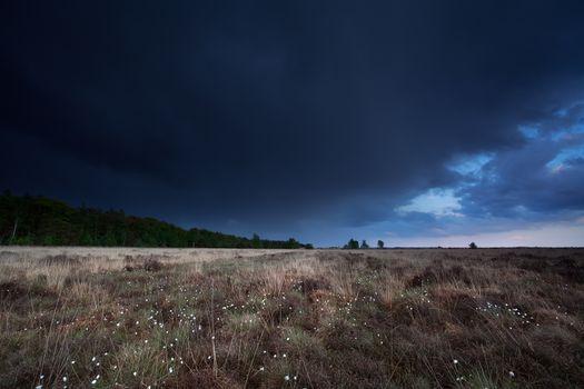 dark stormy sky over marsh with cotton grass