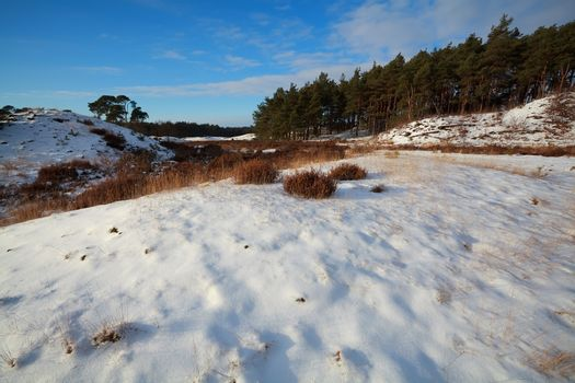 dunes and meadow in snow