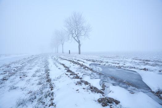 misty frosty morning view