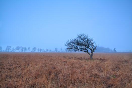 alone tree on misty marsh