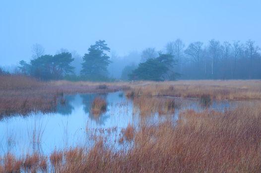 autumn fog over swamp