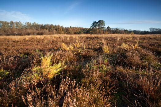 little spruce trees on meadow