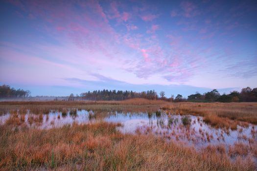 beautiful dramatic sunrise over swamp