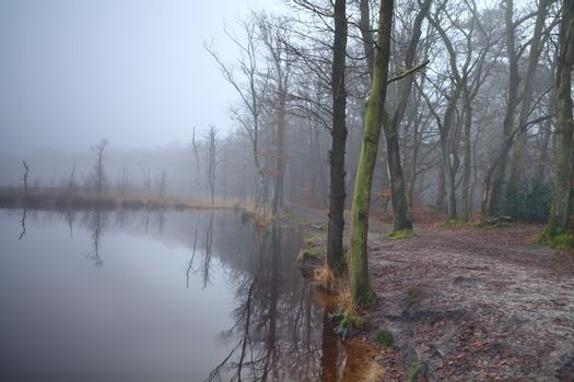 lake in forest and dense fog