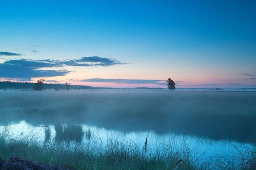 summer misty morning on bog