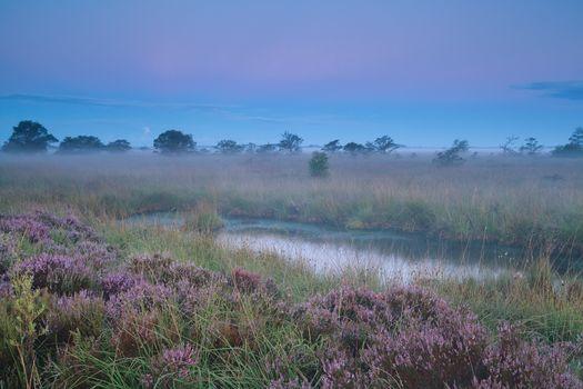beautiful calm misty sunrise over swamp